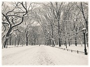 Winter Trees Photo Posters - Central Park Winter - Poets Walk in the Snow - New York City Poster by Vivienne Gucwa