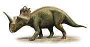 Centrosaurus Apertus, A Prehistoric Era Print by Sergey Krasovskiy