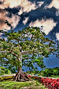 Puerto Rico Digital Art Prints - Centuries Old Ceibas Tree Print by Frank Feliciano