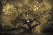 Live Oak Prints - Centurion Oak Print by DigiArt Diaries by Vicky Browning
