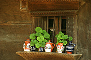 Wooden Bowls Prints - Ceramic jugs and geraniums at the window Print by Emanuel Tanjala