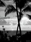 Tropical Sunset Pyrography Prints - Certain Moment in Black and White Print by Gina De Gorna