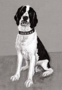 Custom Pet Drawing Prints - Cesar - Portrait of a Springer Spaniel Print by Ruthie Sutter
