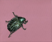 Beetle Paintings - Chaf Beetle by Jude Labuszewski