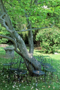 Landscape Prints Framed Prints - Chairs and the Tree Framed Print by Kathy Yates
