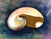 Water Color Acrylic Prints - Chambered Nautilus Acrylic Print by Barbara Jewell