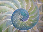 Da Vinci Mixed Media - Chambered Nautilus by Ev Cabrera Marinucci