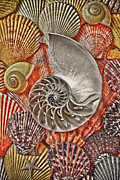Orange Posters - Chambered Nautilus Shell Abstract Poster by Garry Gay