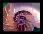 Seashell Digital Art Art - Chambers of Evolution 2 by Daniel Goodwin