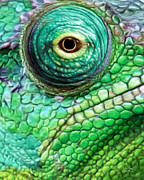 Reptiles Digital Art Originals - Chameleon by Bill Fleming