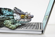 Laptop Framed Prints - Chameleon Wearing Spectacles With Laptop Computer Framed Print by Andrew Bret Wallis