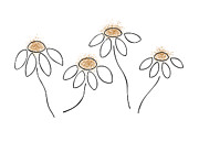 Black  Drawings Prints - Chamomile Print by Frank Tschakert