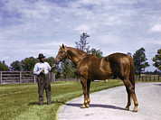 Champion Prints - Champion Horse Man-o-war Poses With One Print by B. Anthony Stewart