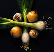 Spring Onion Prints - Champs And Onions Print by Inigo Cia