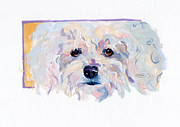 Maltese Puppy Prints - Chanel Print by Kimberly Santini