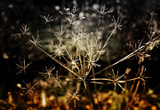 Fall Grass Metal Prints - Changes Metal Print by Ellen Lacey