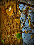 Prescott Framed Prints - Changing Leaves and a Cottonwood Trunk Framed Print by Aaron Burrows