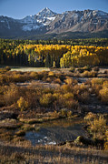Aspens Posters - Changing Season Poster by Jeff Kolker