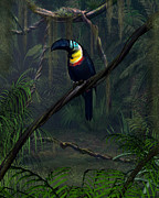 Toucan Digital Art Posters - Channel Billed Toucan Poster by Walter Colvin