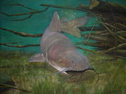 Channel Catfish Posters - Channel Catfish Poster by Jackie  Hill