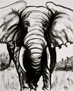 Elephant Drawings Framed Prints - Charcoal Framed Print by Pete Maier