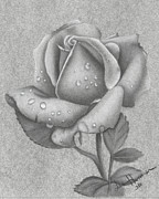 Lee Herman - Charcoal Rose