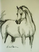 Horse Sketch Framed Prints - Charcoal Study of a Horse Framed Print by Veronica Coulston