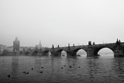 Black And White Birds Prints - Charles Bridge, Praha Print by Gil Guelfucci