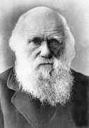 1800s Framed Prints - Charles Darwin 1809-1882, Circa Framed Print by Everett