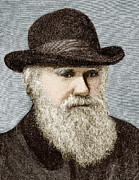British Portraits Art - Charles Darwin, British Naturalist by Sheila Terry