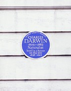 Commemorative Posters - Charles Darwin Commemorative Plaque Poster by Martin Bond