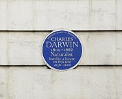 Commemorative Posters - Charles Darwin Commemorative Plaque Poster by Seymour
