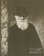 Famous Book Art - Charles Darwin, English Naturalist, 1881 by Science Source