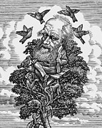 Caricature Prints - Charles Darwin In His Evolutionary Tree Print by Bill Sanderson