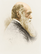 Origin Photo Posters - Charles Robert Darwin, English Poster by Science Source