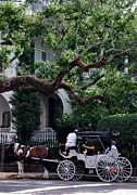 Horse And Cart Art - Charleston Buggy Ride by Skip Willits