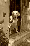 Tan Dog Prints - Charleston Shop Dog in sepia Print by Suzanne Gaff