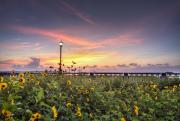 Lamp Originals - Charleston Waterfront Park Sunrise by Dustin K Ryan