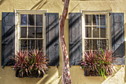 Rainbow Row Posters - Charleston Window Boxes Poster by Drew Castelhano