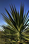 Lowcountry Prints - Charleston Yucca Print by Dustin K Ryan