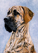 Great Dane Paintings - Charley by Caroline Collinson