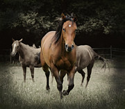 Wild Horses Digital Art Prints - Charlie and friends Print by Jana Goode