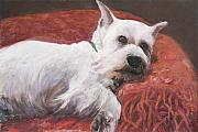 White Dog Framed Prints - Charlie Framed Print by Billie Colson