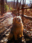 Fall Landscape Digital Art - Charlie by Doug Kreuger