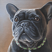 French Bulldog Paintings - Charlie  by Steven Tetlow