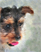 Yorkie Metal Prints - Charming Metal Print by Betty LaRue