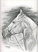 Horses Drawings - Charros horse by Jana Goode