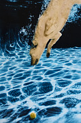 Diving Dog - Chase 2 by Jill Reger