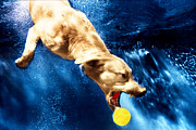Diving Dog - Chase by Jill Reger