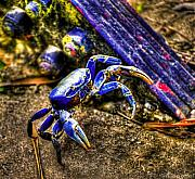 Paint Photograph Posters - Chasing Crabs Poster by Sarita Rampersad